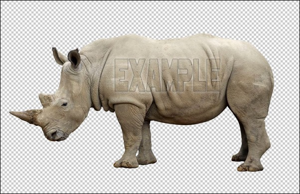 rhino-example