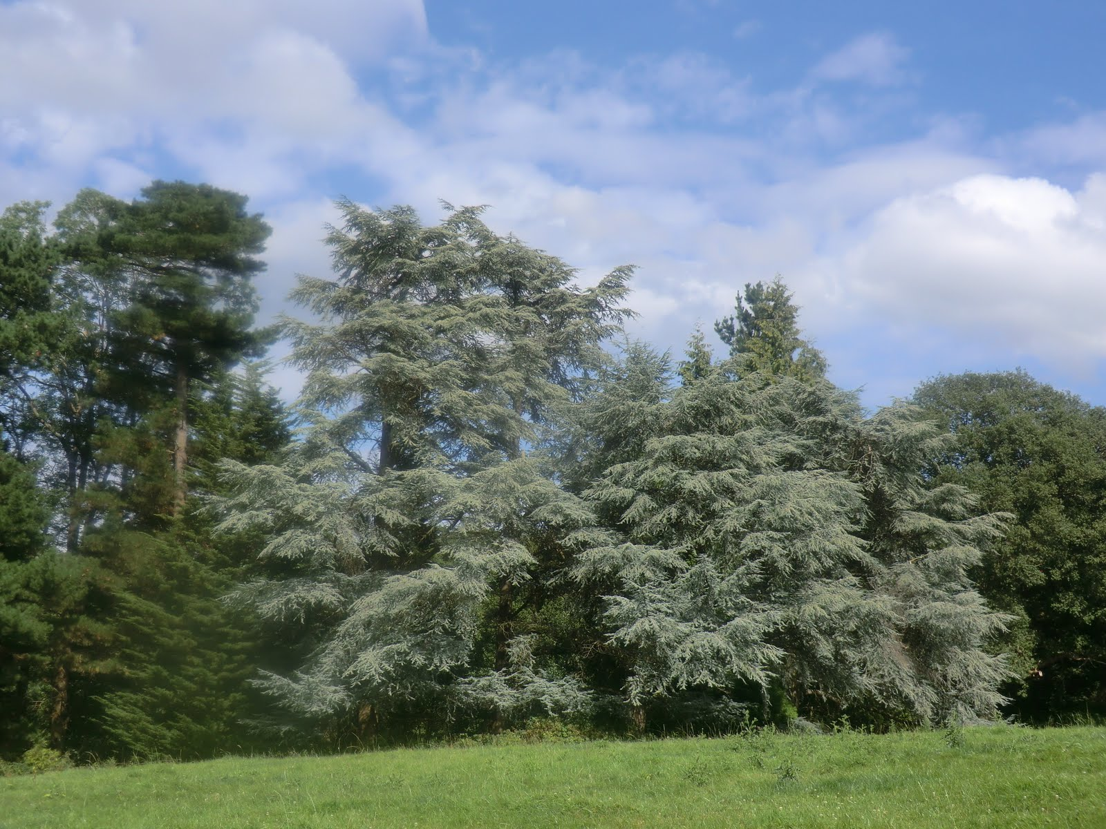 CIMG3757 Ornamental trees, Borde Hill