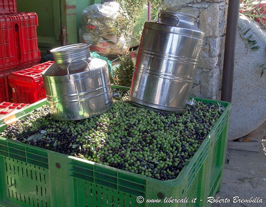 [42-Frantolio-Olive-Biosio-Bellano_006%5B4%5D]