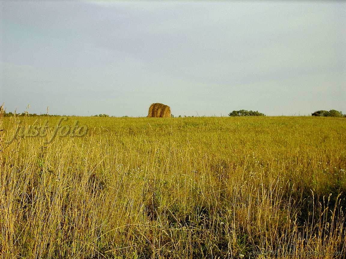 Ветвеник Гдовского уезда - поля фото