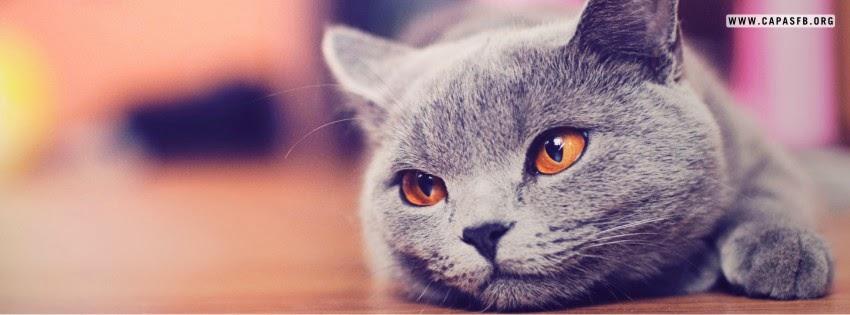 Capas para Facebook Gato