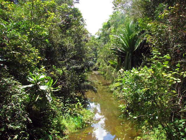صور من مدغشقر Madagascar 14687899848