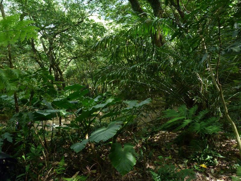 TAIWAN Taipei Dahu Park et dans le quartier de SHIH CHIEN University - P1260230.JPG