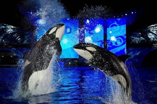 Christmas at SeaWorld: Festa de Natal na Disney