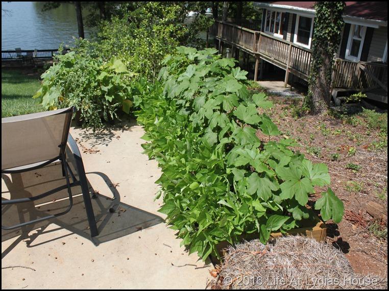 mini garden August - 1
