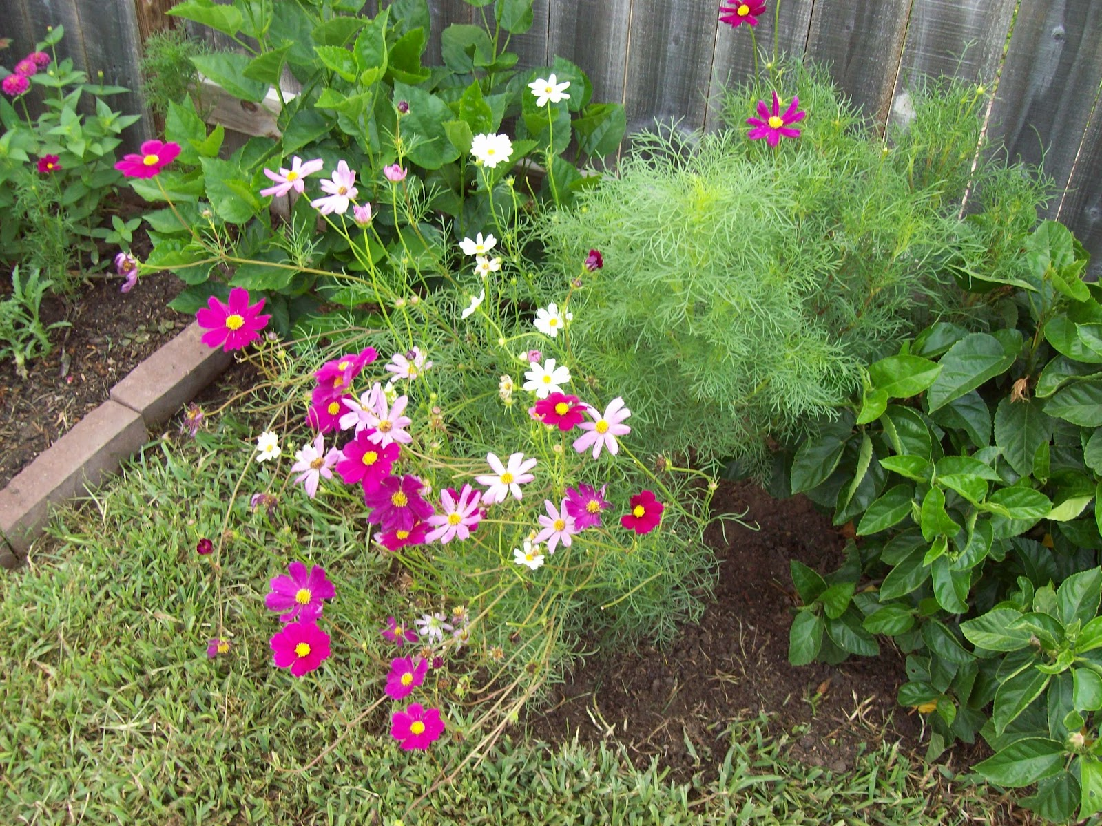 Gardening 2009 - 101_4658.JPG