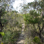 Track east of Chinamans Gully on Mount Solitary (314861)