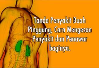 Info penyakit buah pinggang