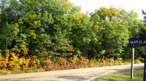 Early underbrush color at end of Maplelag driveway
