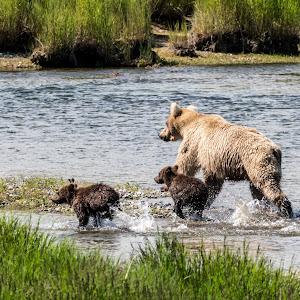 Alaska Day 1 Pentax 3Jul17-5NoC.jpg