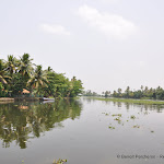 Photo de la galerie « Le Kérala et ses backwaters »