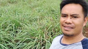 Kepala Desa Kabandungan Asep Saepudin, Realisasikan Program Budidaya Sereh dan Pertanian