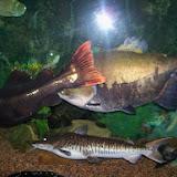 Downtown Aquarium - 116_3882.JPG