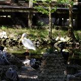 04-07-12 Homosassa Springs State Park - IMGP4565.JPG