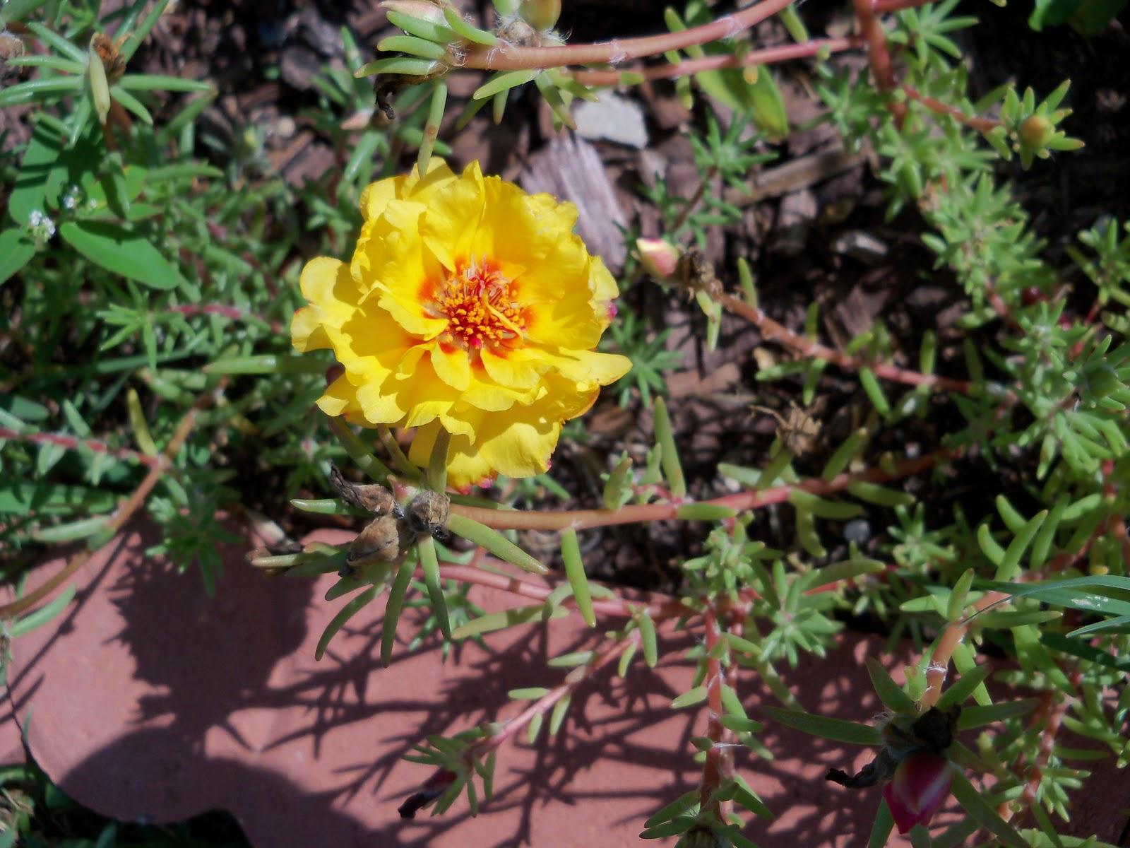 Gardening 2010, Part Two - 101_2597.JPG