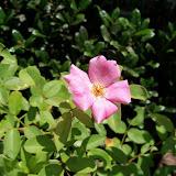 Gardening 2010, Part Three - 101_4515.JPG