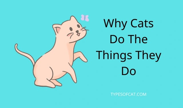 Understanding Cat Behavior – Why Cats Do The Things They Do