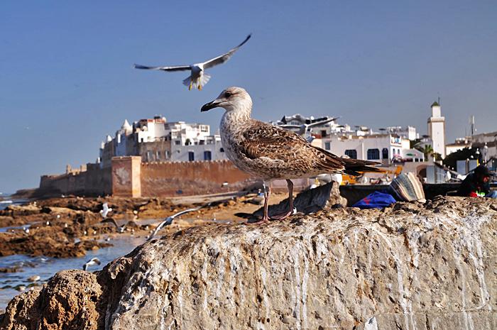 Essaouira07.JPG