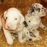 Jasper and Freyr