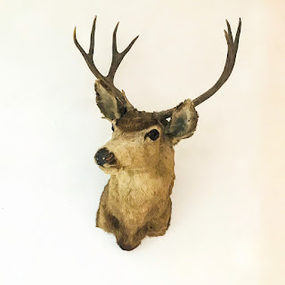 Vintage Deer Taxidermy Specimen