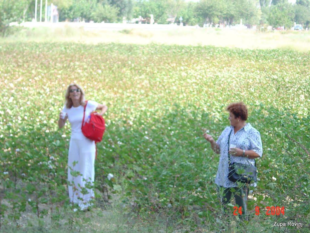 ANTALIA 2004. - 2 - DSC03977.JPG