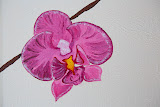 61 orchidees-det-1 AP4A9122.jpg