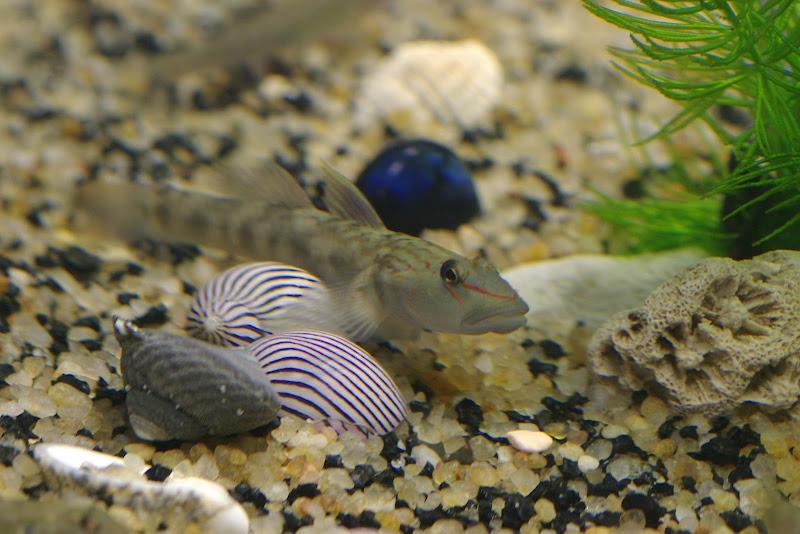 請問這是什麼魚啊