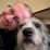 Jeff Hollon's profile photo