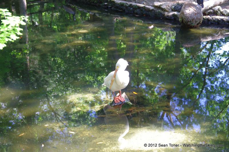 04-07-12 Homosassa Springs State Park - IMGP0061.JPG