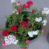 Gardening 2013 - 115_5452.JPG