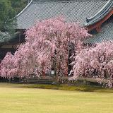 2014 Japan - Dag 8 - tom-SAM_0523-0028.JPG