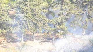 24 feux de forêts enregistrés et plus de 199 hectares détruits en 24 heures