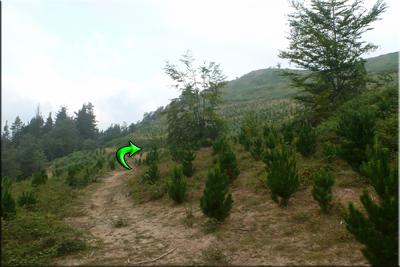 Nos dirigimos hacia el pinar
