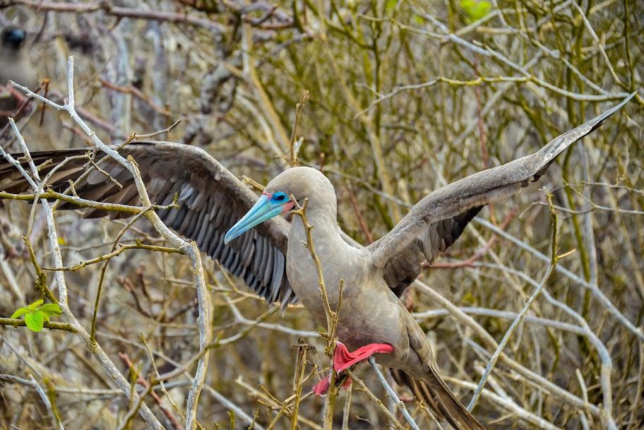 galapagos - Galapagos_FB_2-14.jpg