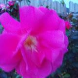 Gardening 2012 - 115_1209.JPG
