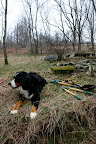 Cosmo supervising orchard work March 22.