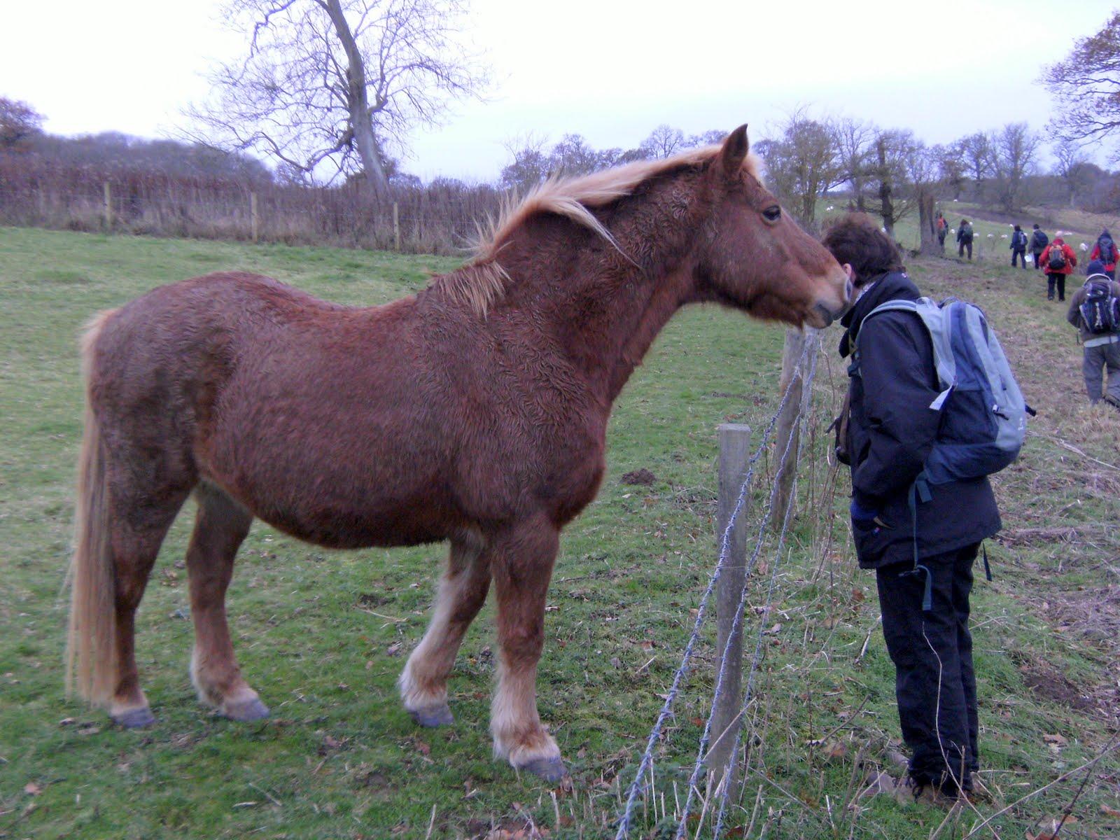 DSCF2714 Friendly horse at Freefolk