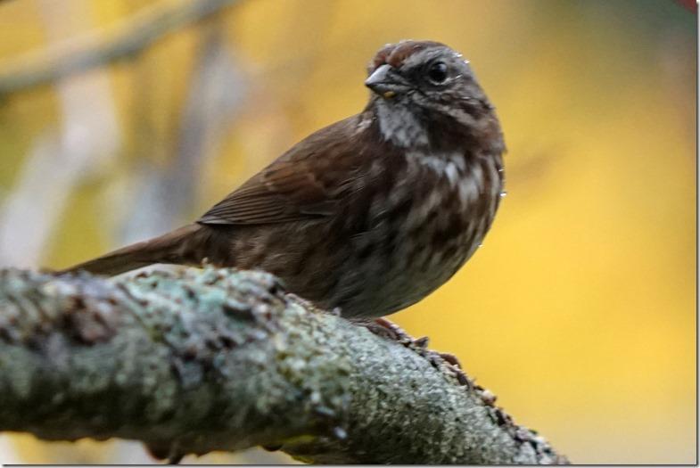 lopez sparrow 110217 00001