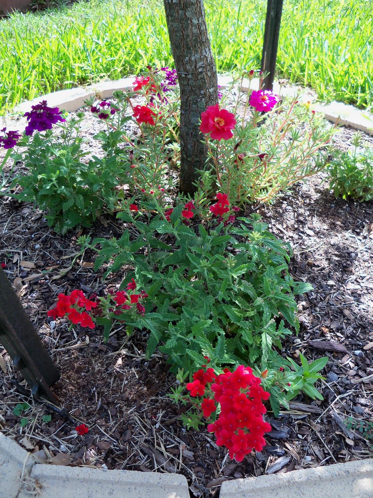 Gardening 2010, Part Three - 101_3833.JPG