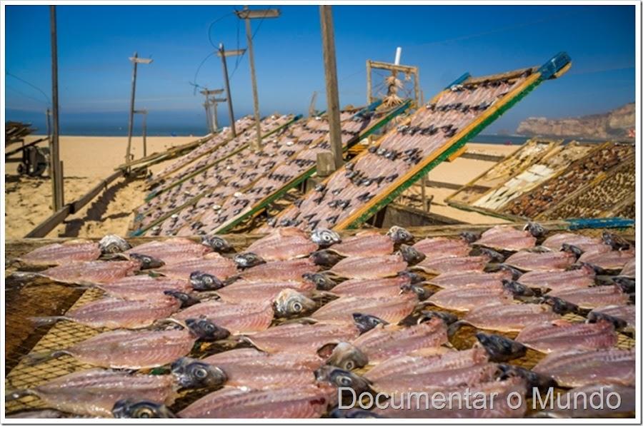 A tradição piscatória na Praia da Nazaré, exposição barcos Nazaré, secagem peixe Nazaré