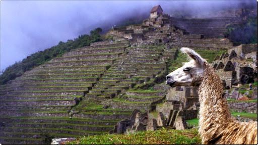 Llama, The Inca Trail, Machu Picchu, Peru.jpg