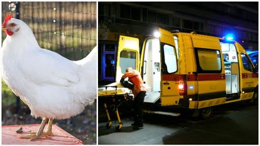 باجة / نقل كهل الى المستشفى اغتصب دجاجة وأصيب بإلتهاب حاد في عضوه الذكري !