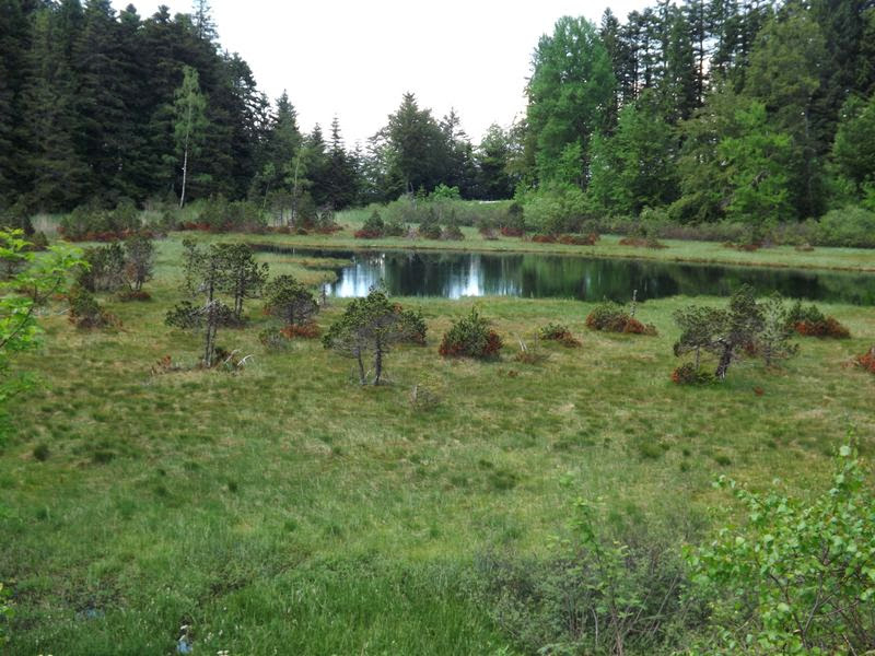 La tourbière du lac Luitel
