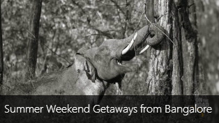 Top 10 Summer Weekend Getaways from Bangalore