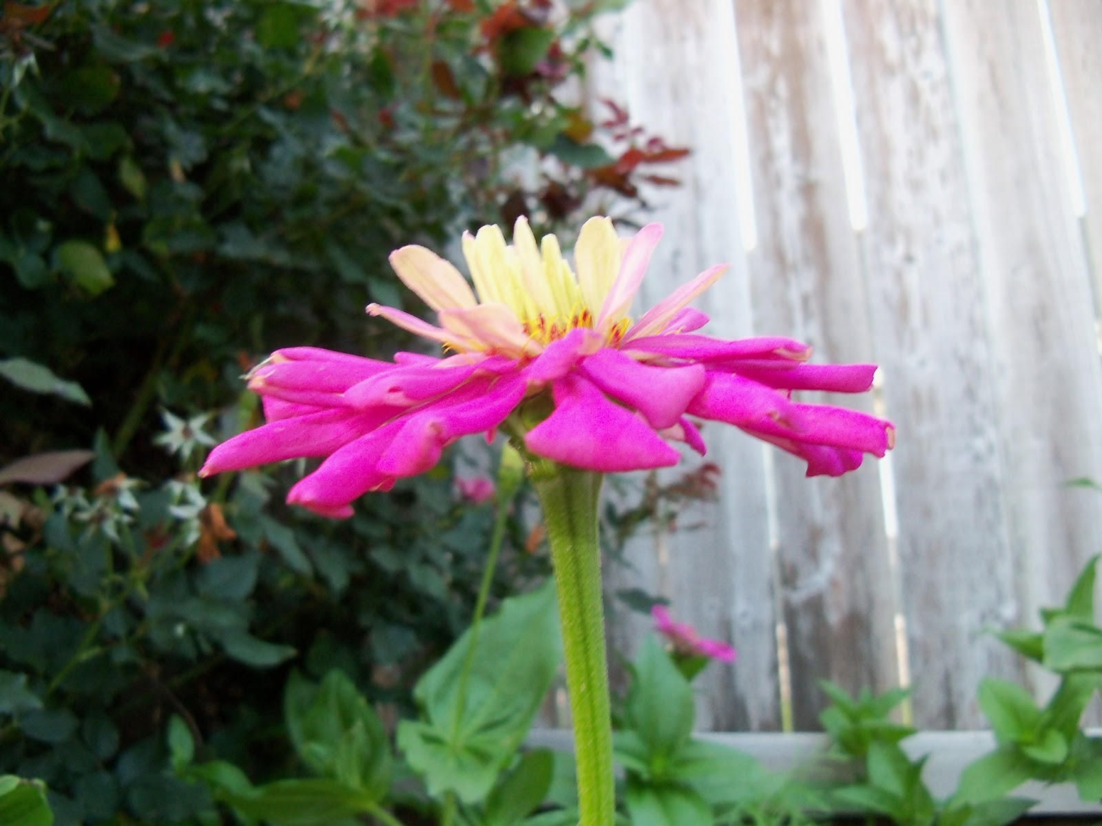 Gardening 2012 - 115_2041.JPG
