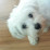 Dylan Yang's profile photo