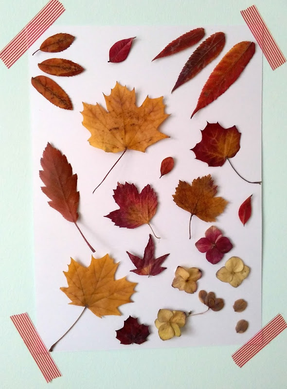 autumn leaf display