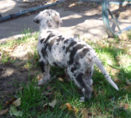 Cooper @ 5 weeks
