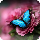 Blue Butterfly Theme icon