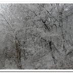erdő, zúzmara 014.jpg
